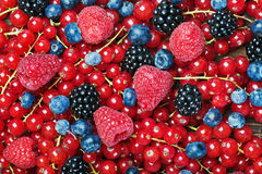 Fresh blueberries, currants, blackberries, cranberries and raspb Royalty Free Stock Photos