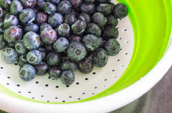 Fresh blueberries in a drip strainer. Stock Image