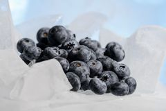 Fresh blueberries are frozen on cold blue ice. Royalty Free Stock Photo