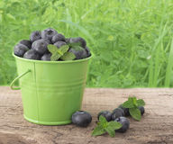 Fresh blueberries. In the green bucket on the table Stock Photo