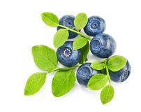 Fresh blueberries with green leaves Royalty Free Stock Images