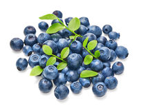 Fresh blueberries with green leaves Stock Photography