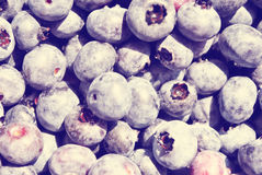 Fresh Blueberries. Fresh, hand-picked blueberries from a local farm Stock Photography