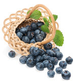Fresh blueberries with leaf in a basket is scattered Royalty Free Stock Images