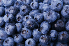 Fresh blueberries. A lot of fresh blueberries close-up Stock Photos