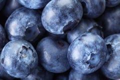 Fresh blueberries macro Royalty Free Stock Photography