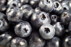 Fresh Blueberries Marco Royalty Free Stock Photos