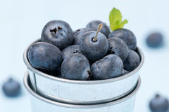Fresh blueberries in a metal bucket, close-up, selective focus Stock Image