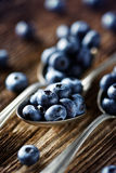 Fresh blueberries from organic cultivation. On rustic wooden table Stock Photography