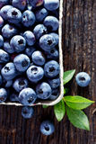 Fresh blueberries from organic cultivation on rustic wooden table royalty free stock photo