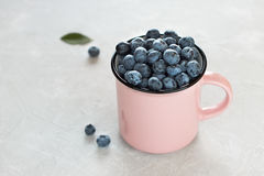 Fresh blueberries in pink mug or cup on light gray background. Stock Image