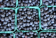 Fresh Blueberries in Pint Containers. Looking down on rows of blueberries in pint containers royalty free stock image