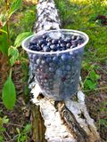 The yellow do not cross line on the seafrontFresh antioxidant blueberries in plastic jar on the birch with green leaves in the for stock photos