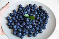 Fresh blueberries on a plate, hand holding. Some fresh blackberries on white plate concrete background stock photos