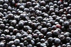 Fresh blueberries on plate Stock Photos