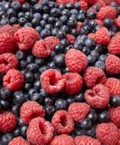 Fresh blueberries and raspberries Stock Photography