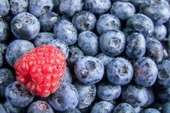 Fresh blueberries and raspberries Royalty Free Stock Photos