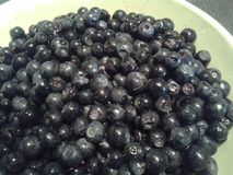 Fresh blueberries Royalty Free Stock Images