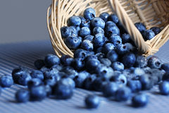 Fresh blueberries spilling from wicker basket. Blueberries spilling from a wicker basket on blue checkered tablecloth Royalty Free Stock Photos