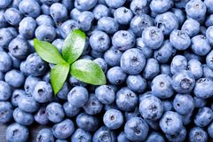 Fresh blueberries, top view Royalty Free Stock Photos