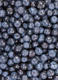 Fresh blueberries, vertical background Royalty Free Stock Images