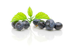 Fresh blueberries on a white background. close-up. Stock Photography