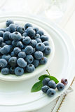Fresh blueberries on a white plate Stock Images