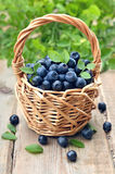 Fresh blueberries in wicker basket Royalty Free Stock Image