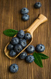 Fresh blueberries in a wooden scoop Stock Images