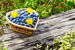 Fresh blueberries with yellow flowers Royalty Free Stock Images