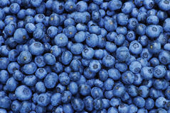 Fresh Blueberry Background Stock Image