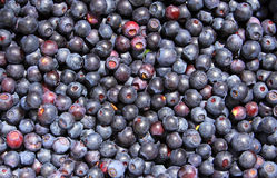 Fresh blueberry background Stock Photography
