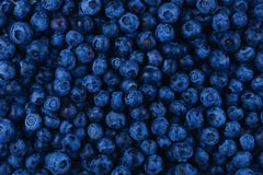 Fresh blueberry background. Texture blueberry berries close up Stock Photo