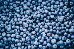 Fresh blueberry background. Texture blueberry berries close up stock photography