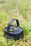 Fresh blueberry in basket Stock Image