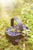 Fresh blueberry in basket Royalty Free Stock Photos
