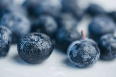 Fresh blueberry berries on a white plate close-up. breakfast of wild berries. copy space royalty free stock photography