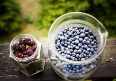 Fresh blueberry and blackberry. In glass royalty free stock photo