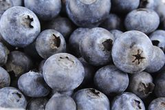 Fresh blueberry fruits closeup food background texture Royalty Free Stock Image