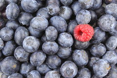 Fresh blueberry fruits and a red raspberry closeup food background texture Royalty Free Stock Photography