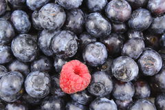 Fresh blueberry fruits and a red raspberry closeup food background texture Stock Photo