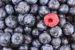 Fresh blueberry fruits and a red raspberry closeup food background texture Stock Image