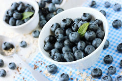Fresh blueberry, great bilberry or bog whortleberry Stock Photography
