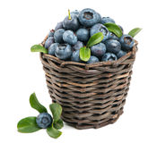 Fresh blueberry with green leaves Stock Photography