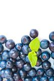Fresh blueberry with green leaves of mint Stock Image