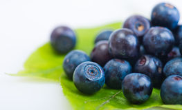 Fresh blueberry on green leaves. On white background Royalty Free Stock Images