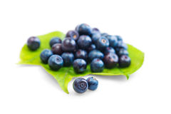 Fresh blueberry on green leaves. On white background Stock Photo