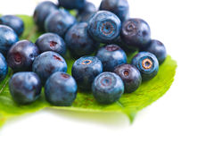 Fresh blueberry on green leaves. On white background Stock Image