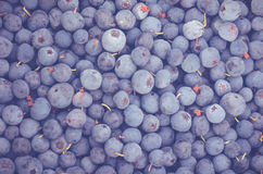 The fresh blueberry Stock Photo