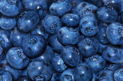 Fresh blueberry. The health and fresh blueberry Stock Images